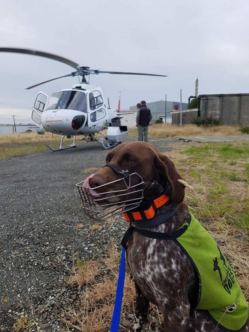 Milo (DOC dog) - transport