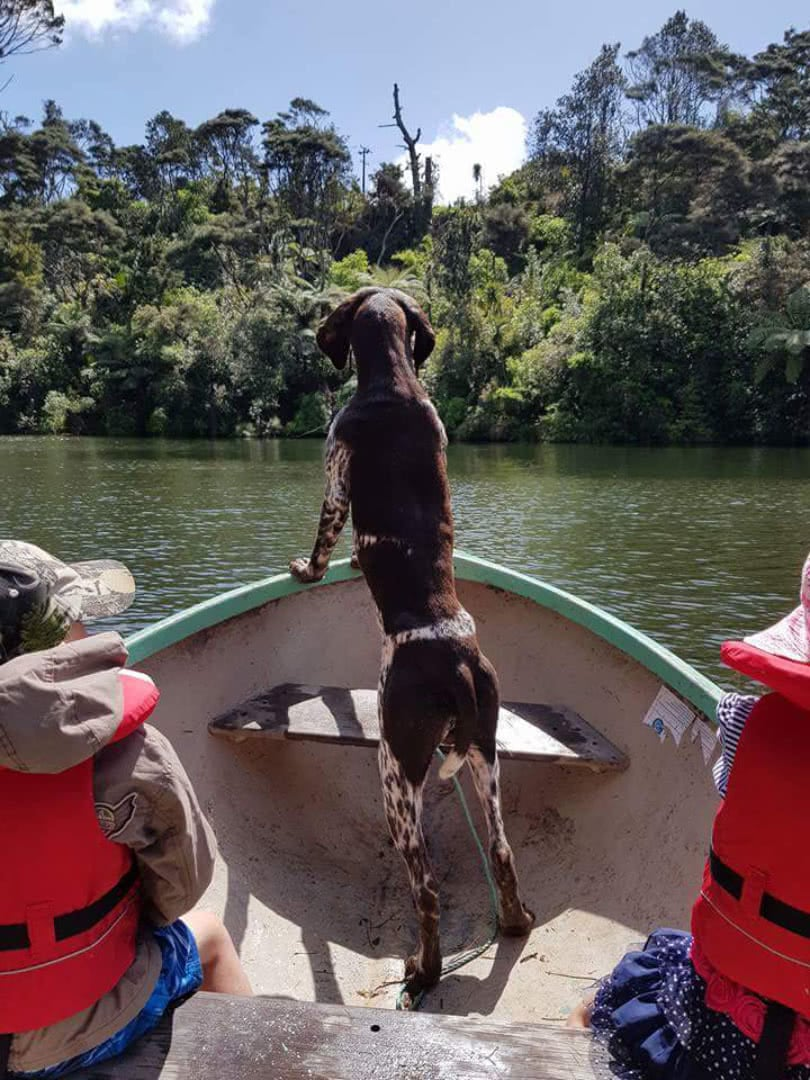 Banjo loves his boating - transport
