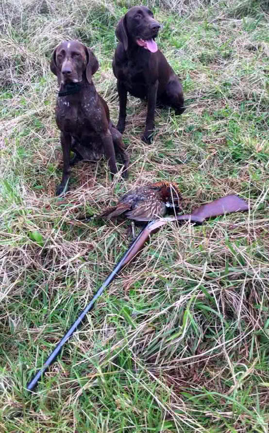 Full choke 2 feet 10 inches. All I have shot with .Ideal Gully Gun. Got a limit bag of pheasant (5) in 20 minutes once.