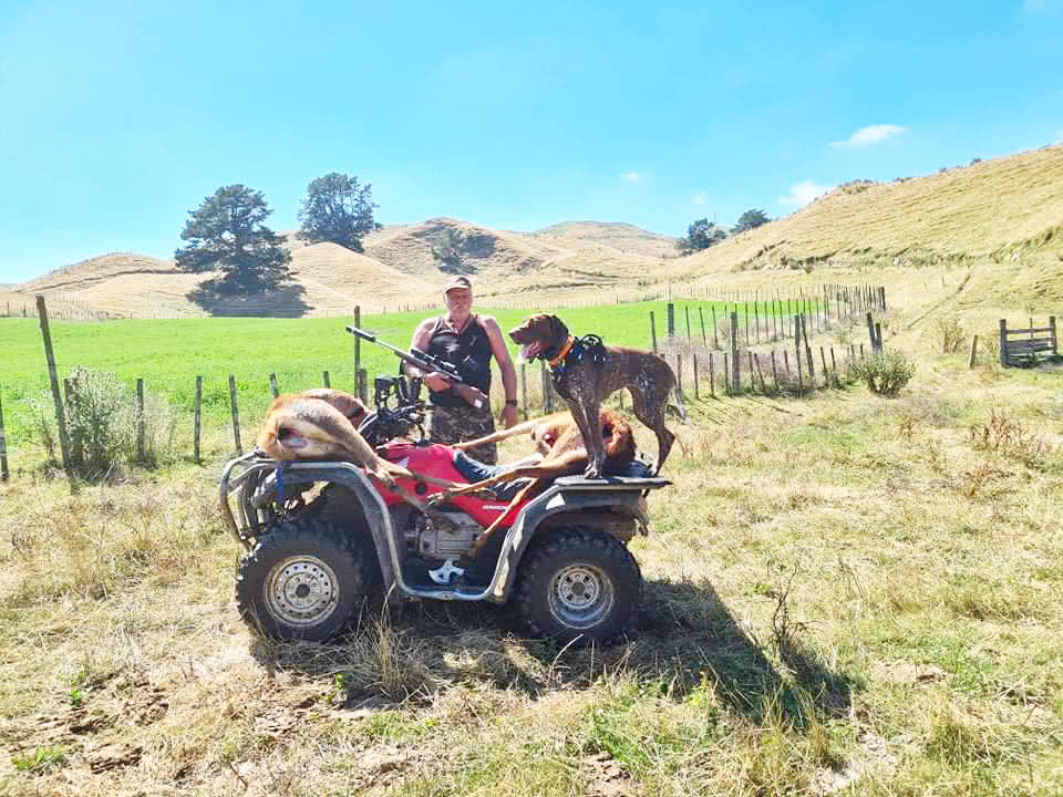 Typical kiwi hunter - quad bike, good GSP and a big result - transport.