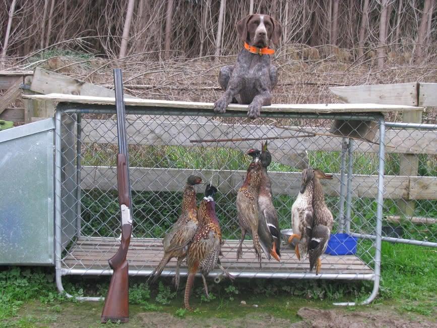Sarah hunts anything
