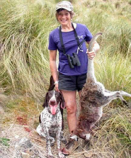 Wendy Schwalger - wallaby hunting with her trusty GSP