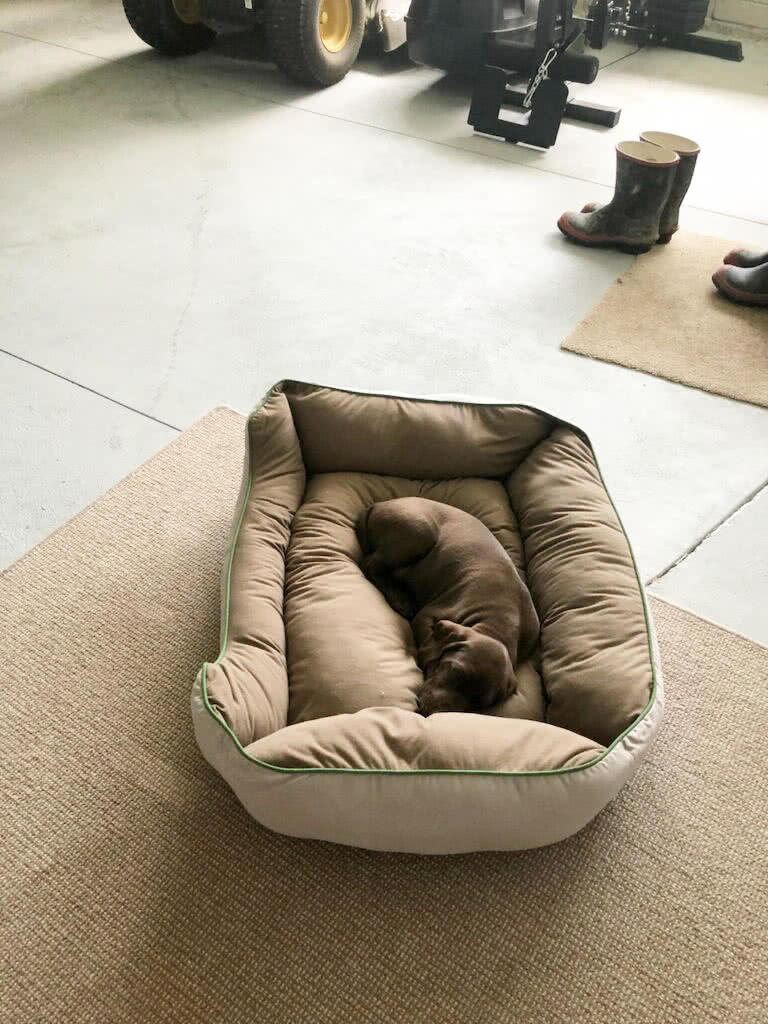 Bedding - very important particularly for a new pup to feel safe and warm.