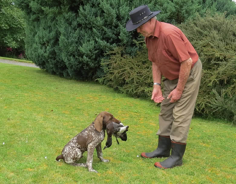 Top NZ working dog trialist training his GSP puppy