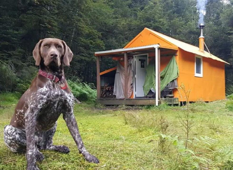 Deer stalking huts NZ