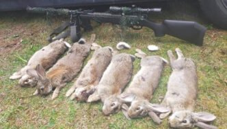 Excellent rabbit hunting NZ