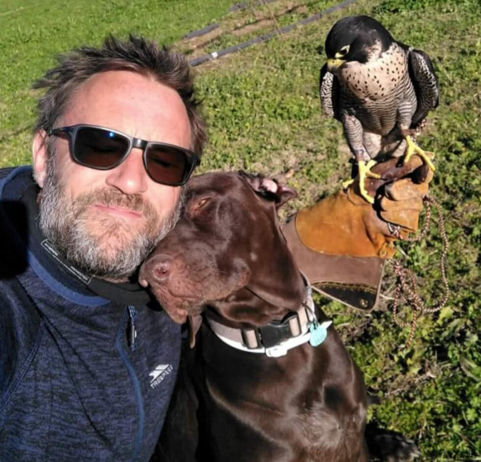 Falcon hunting with GSP'S