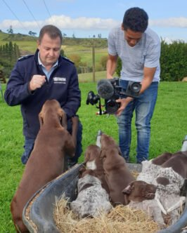 Filming For The NZ dog squad