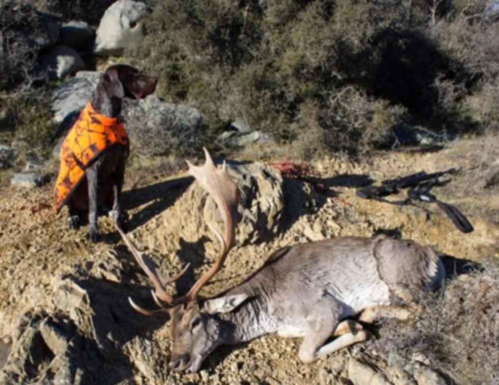 Hunting NZ