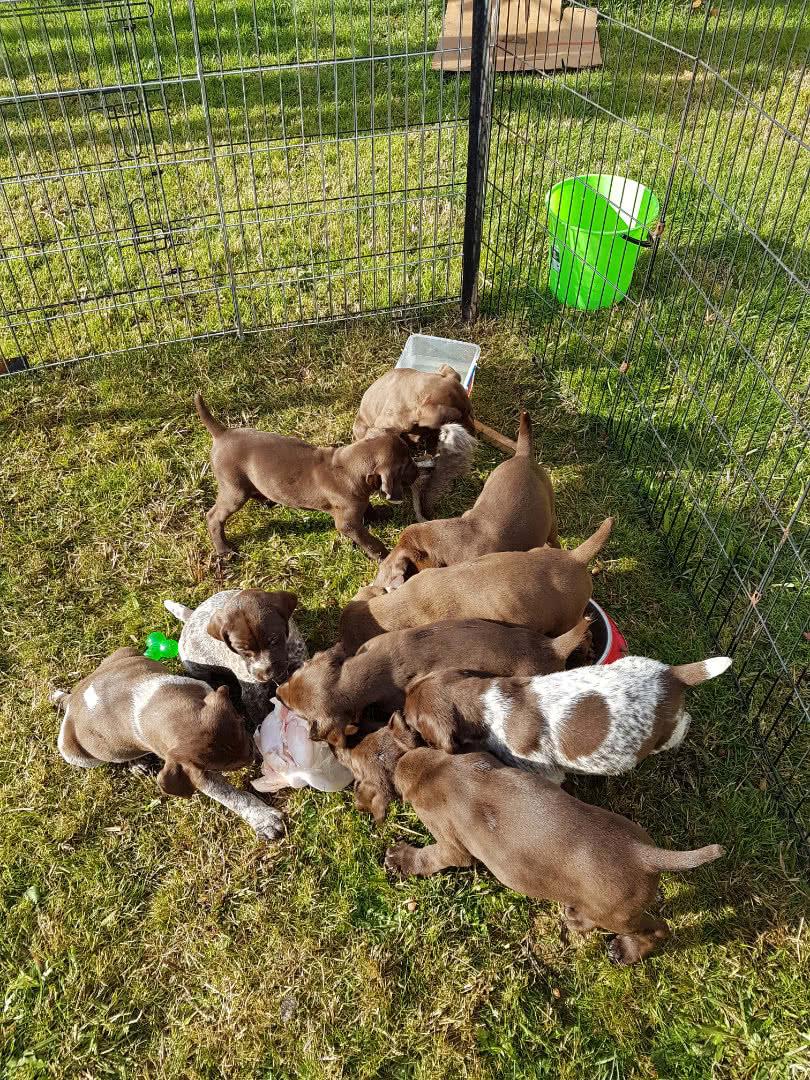 Sunshine pups