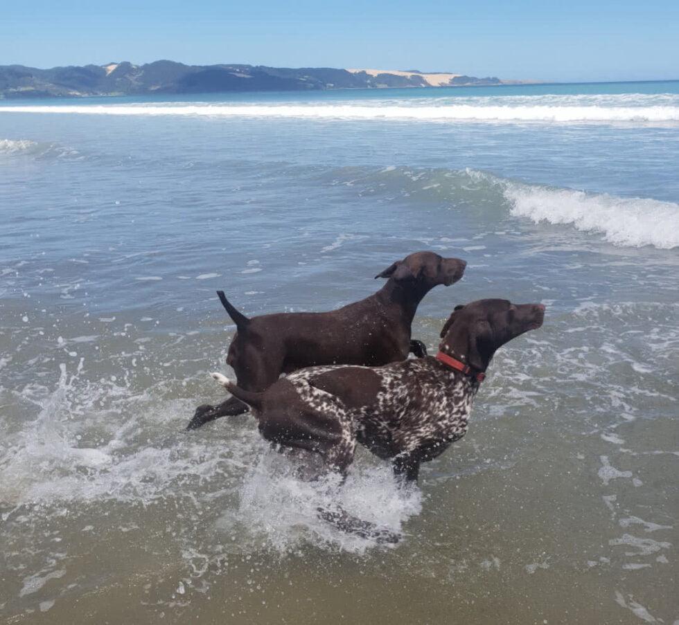 The far north NZ Amber & Wendy